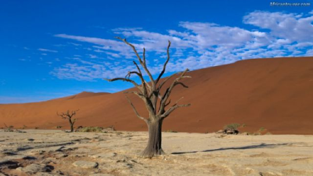 Dead Vlei of Namib Naukluft national park, the remains of a dead tree with sand dunes in the background as seen at dusk<sup>1</sup>
