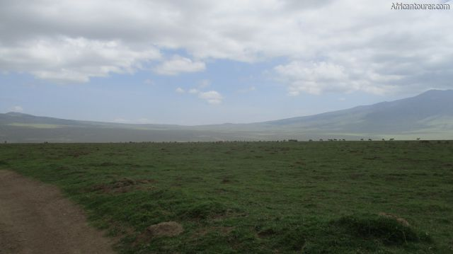 Embulmbul depression of Ngorongoro conservation area, up ahead  after the herd of cows and zebra - a view from the road to Empakaai's eastern rim