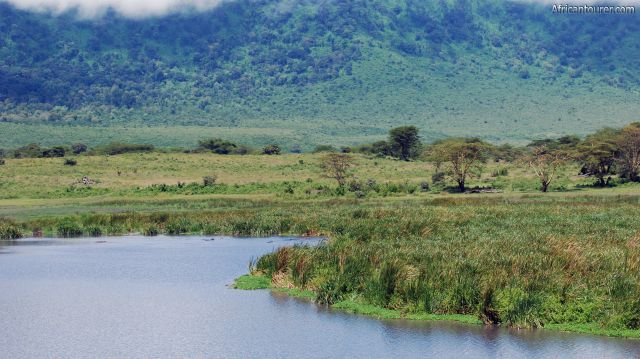 Hippo pool of Ngorongoro crater, as seen from the banks [1]