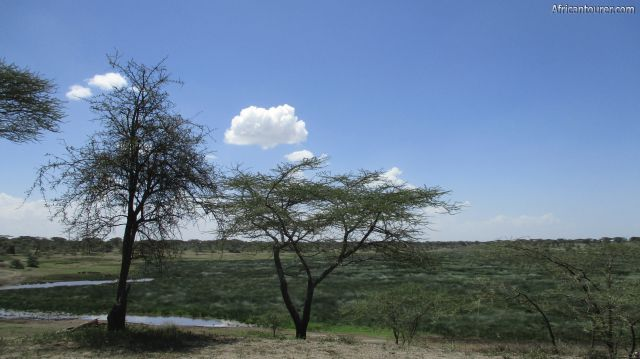 lake L'dabash of Ngorongoro conservation area, a view of the marsh on it