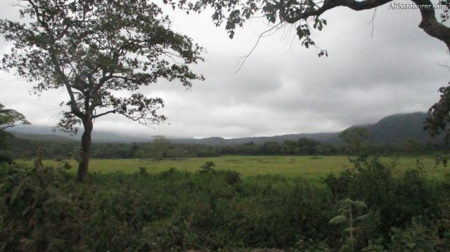 Mini serengeti of Arusha national park, a view of the northern end of the field from the road to Momela (left) on a cloudy morning