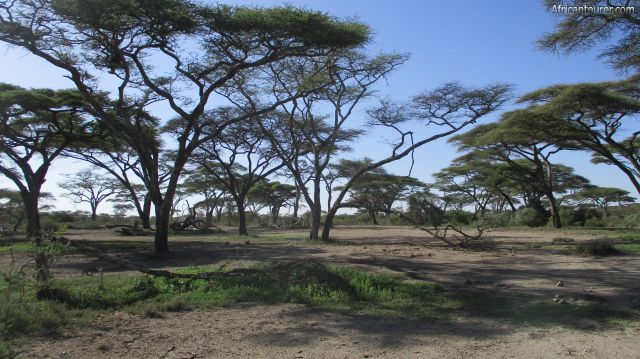 Ndutu special campsites (1), view from north with the lake behind