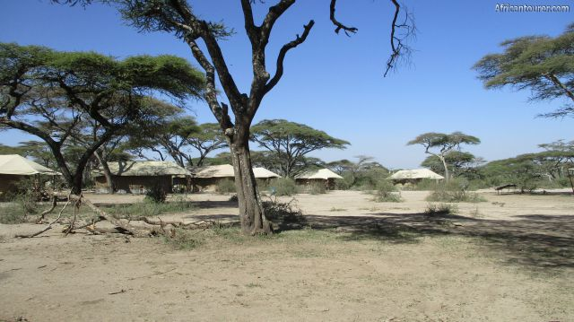 Ndutu special (2) campsite, in use by a tented migration camp