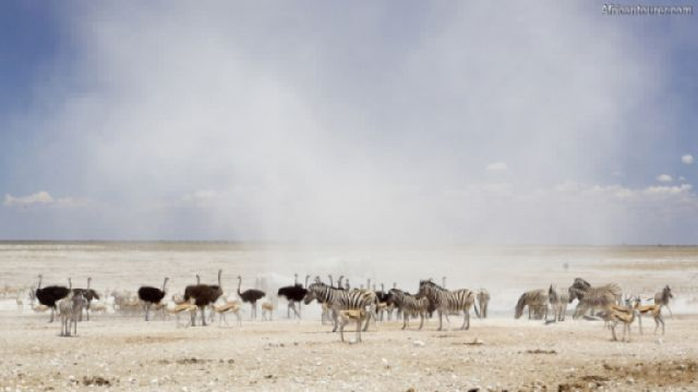 Nebrownii waterhole of Etosha National Park, animals near it during a dust storm<sup>1</sup>