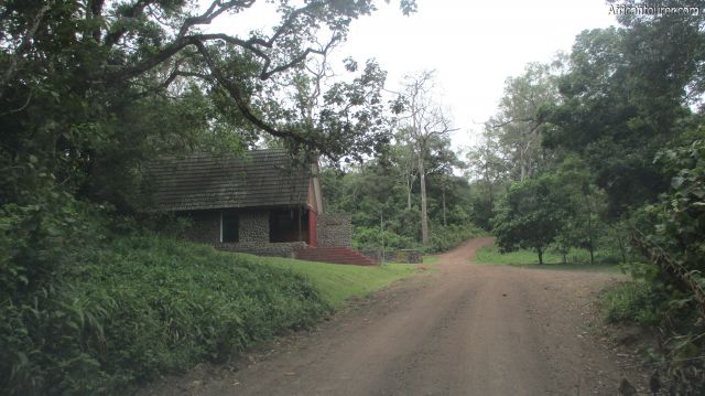 Ngurudoto museum of Arusha national park, view when approaching from Ngongongare gate with road to Ngurudoto crater straight ahead