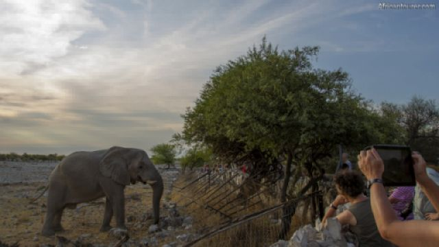Okaukuejo campsite of Etosha national park, visitors looking at an elephant nearby<sup>1</sup>