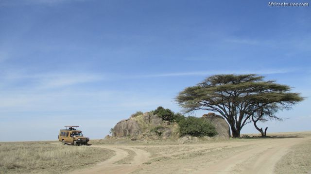 Oogol kopjes of Serengeti national park, two lioness under on one of the koppie next to a tree with a tours warbus on the left