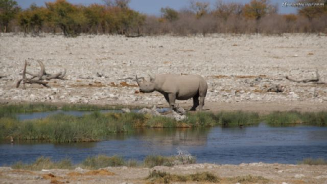 Rietfontein waterhole of Etosha National Park, a black rhinoceros near it <sup>1</sup>